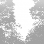 MS000226-350 Tree 6