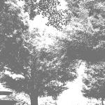 MS000225-350 Tree 5