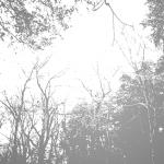 MS000227-350 Tree 7