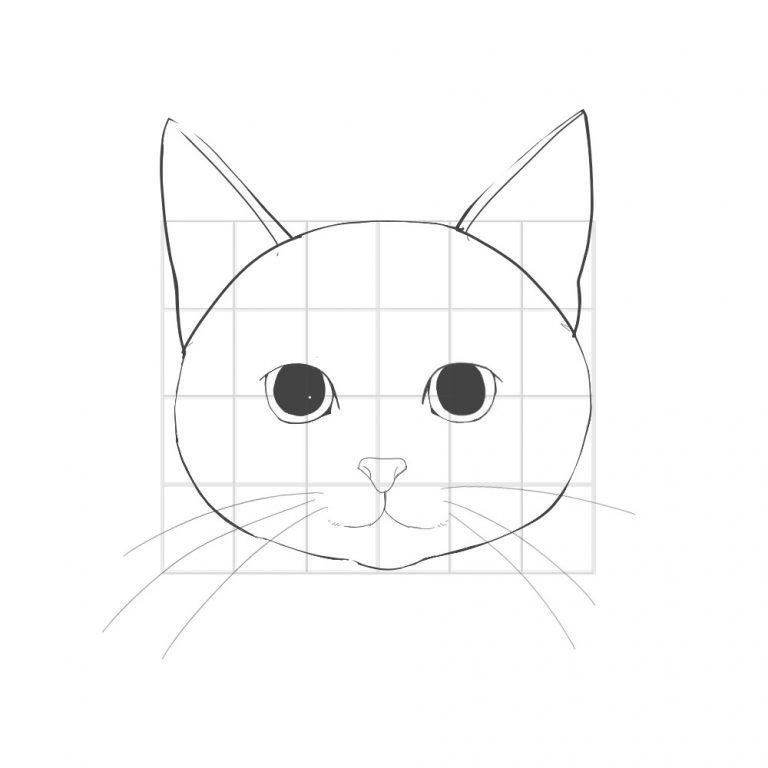 A cat head to draw