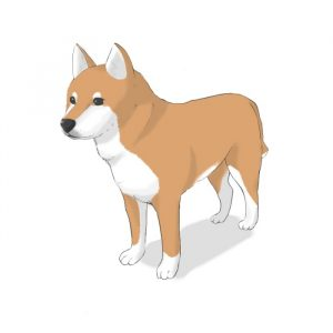 How to draw a dog (2) How to draw the body and pose