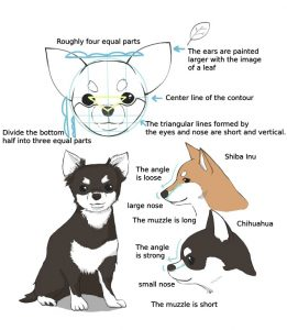 How to Draw Different Types of Dogs