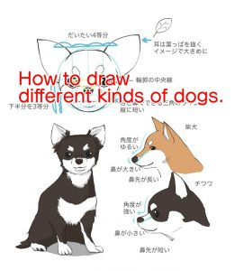 How to draw different kinds of dogs.