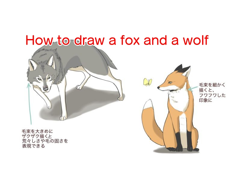 How to draw a fox and a wolf