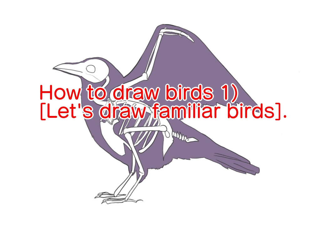 How to draw birds 1) [Let's draw familiar birds].