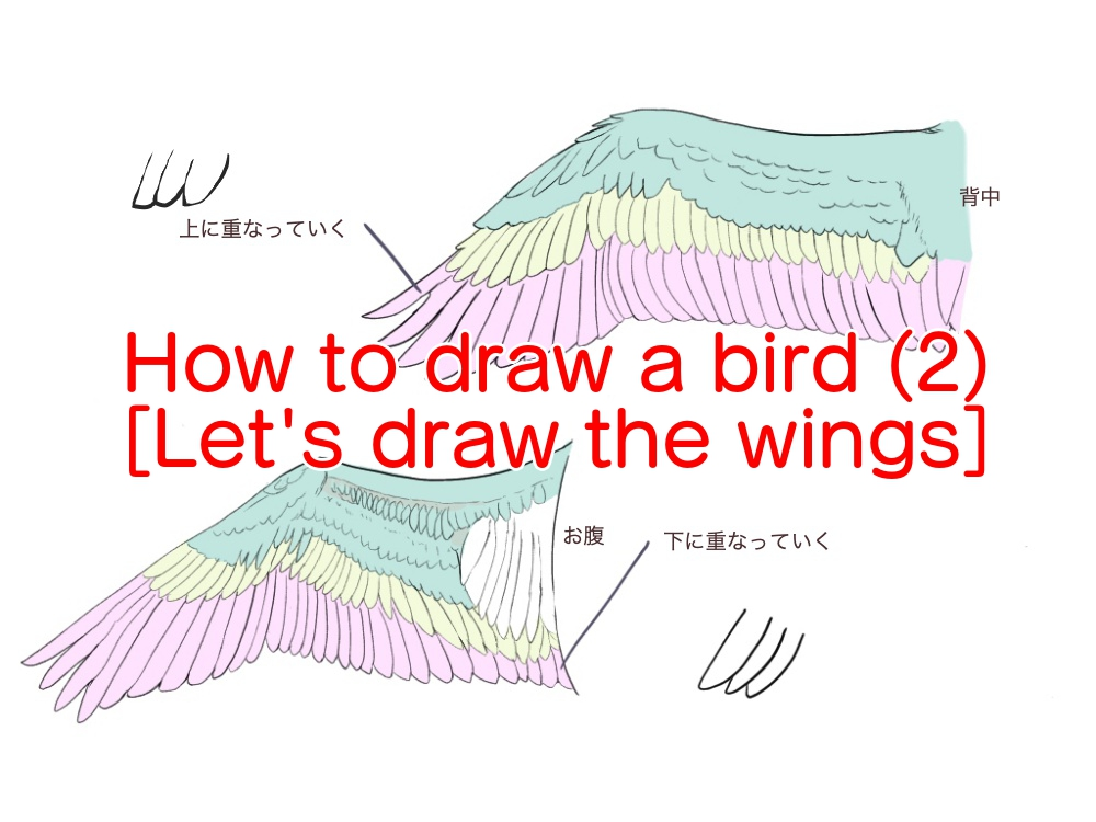 How to draw a bird (2) [Let's draw the wings]