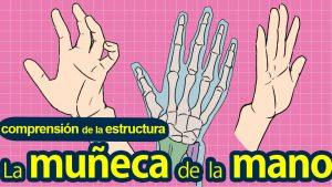 Dibujemos la muñeca de la mano  〜 Comprensión de la estructura 〜