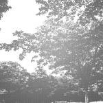 MS000229-350 Tree 9
