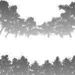 MS000146-350 木1