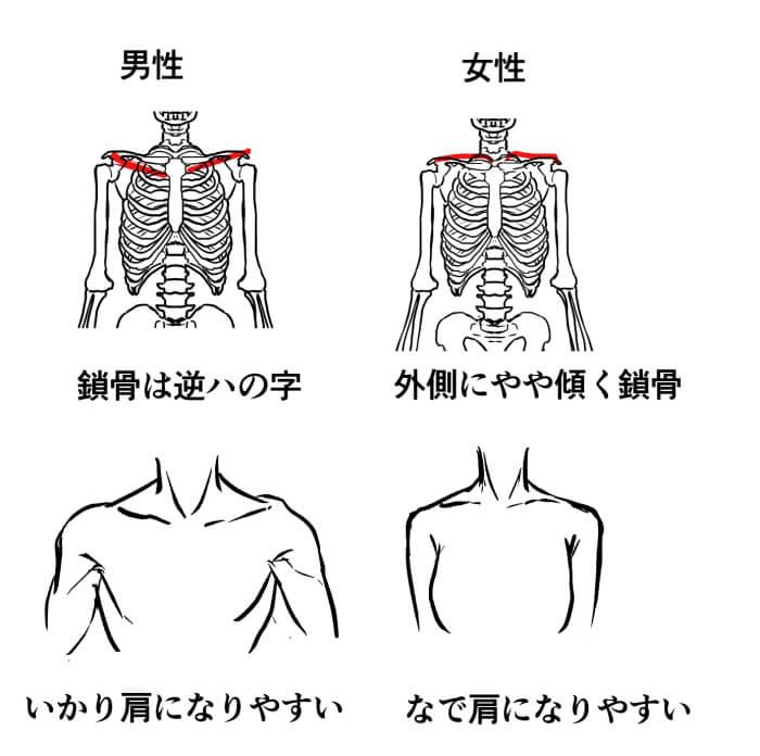 男性 鎖骨