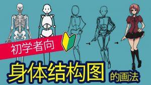 [初学者向]如何画好人体结构?
